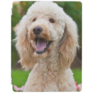 USA, California. Portrait Of Labradoodle iPad Cover