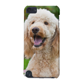 USA, California. Portrait Of Labradoodle iPod Touch (5th Generation) Case