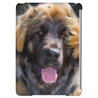 USA, California. Portrait Of Leonberger Sitting