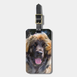 USA, California. Portrait Of Leonberger Sitting Bag Tag