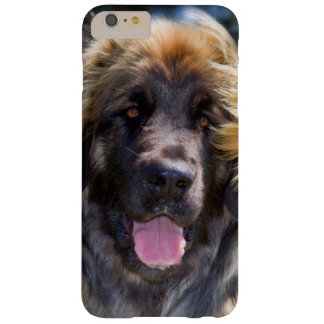 USA, California. Portrait Of Leonberger Sitting Barely There iPhone 6 Plus Case