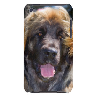 USA, California. Portrait Of Leonberger Sitting Barely There iPod Cases