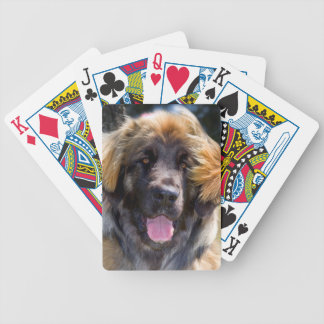 USA, California. Portrait Of Leonberger Sitting Bicycle Playing Cards