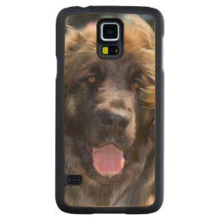 USA, California. Portrait Of Leonberger Sitting Carved Maple Galaxy S5 Case