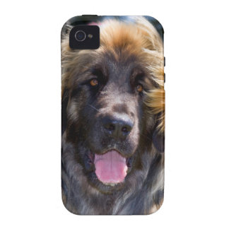 USA, California. Portrait Of Leonberger Sitting iPhone 4/4S Cases
