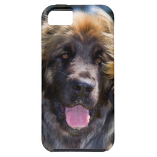 USA, California. Portrait Of Leonberger Sitting iPhone 5 Covers