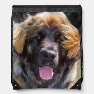 USA, California. Portrait Of Leonberger Sitting Drawstring Bag