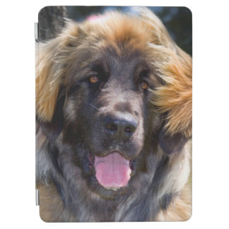 USA, California. Portrait Of Leonberger Sitting iPad Air Cover