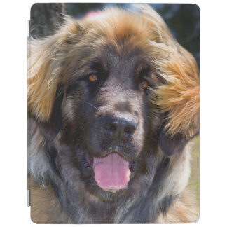 USA, California. Portrait Of Leonberger Sitting iPad Cover