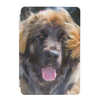 USA, California. Portrait Of Leonberger Sitting iPad Mini Cover