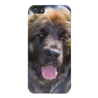 USA, California. Portrait Of Leonberger Sitting iPhone 5/5S Covers