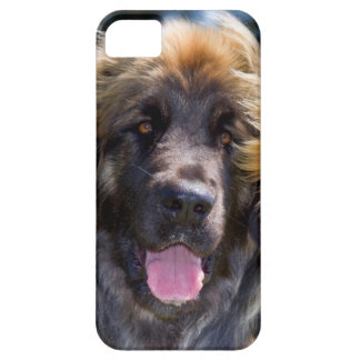 USA, California. Portrait Of Leonberger Sitting iPhone 5 Cover