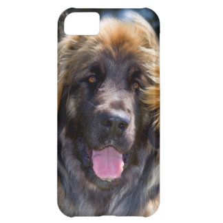 USA, California. Portrait Of Leonberger Sitting iPhone 5C Case
