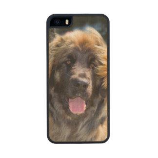USA, California. Portrait Of Leonberger Sitting iPhone 6 Plus Case