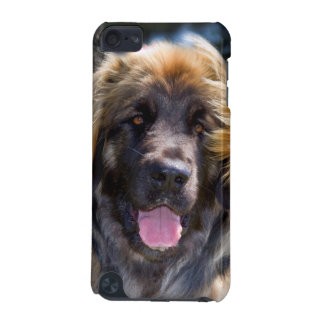 USA, California. Portrait Of Leonberger Sitting iPod Touch 5G Cases