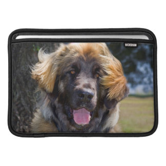 USA, California. Portrait Of Leonberger Sitting MacBook Air Sleeves