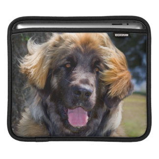 USA, California. Portrait Of Leonberger Sitting Sleeves For iPads