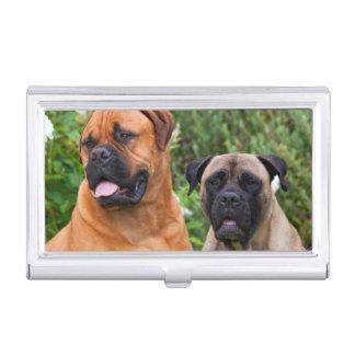 USA, California. Portrait Of Two Mastiffs Business Card Holder