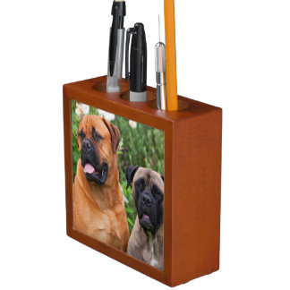 USA, California. Portrait Of Two Mastiffs Desk Organiser