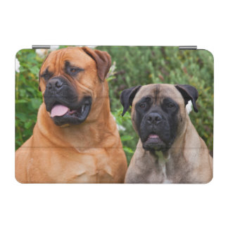 USA, California. Portrait Of Two Mastiffs iPad Mini Cover