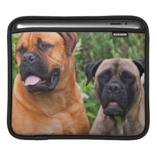 USA, California. Portrait Of Two Mastiffs iPad Sleeve