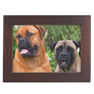 USA, California. Portrait Of Two Mastiffs Keepsake Box
