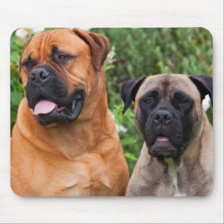 USA, California. Portrait Of Two Mastiffs Mouse Mat