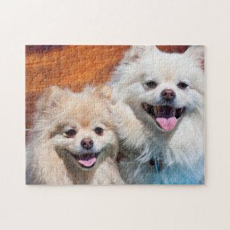USA, California. Portrait Of Two Pomeranians Jigsaw Puzzle