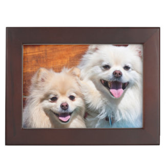 USA, California. Portrait Of Two Pomeranians Keepsake Box