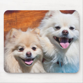 USA, California. Portrait Of Two Pomeranians Mouse Mat