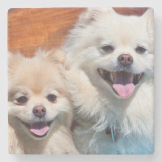 USA, California. Portrait Of Two Pomeranians Stone Coaster