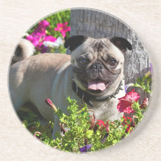 USA, California. Pug In Flower Garden Coaster