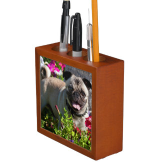 USA, California. Pug In Flower Garden Desk Organiser