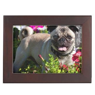 USA, California. Pug In Flower Garden Memory Boxes