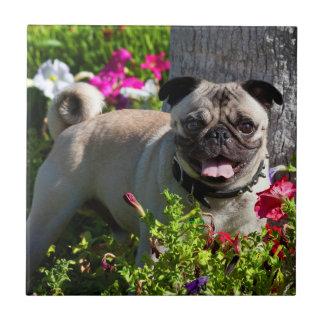 USA, California. Pug In Flower Garden Tile