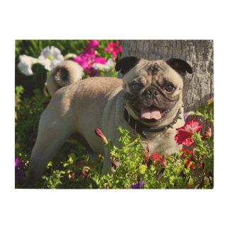 USA, California. Pug In Flower Garden Wood Wall Art