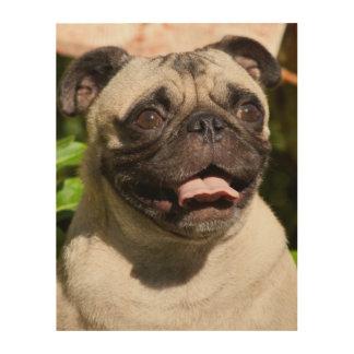 USA, California. Pug Portrait Wood Prints