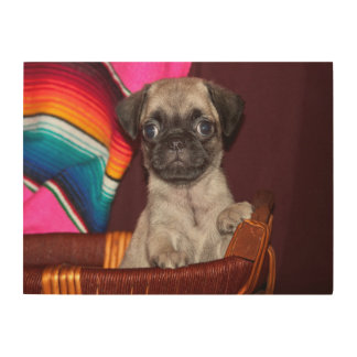 USA, California. Pug Puppy In A Wooden Basket Wood Print