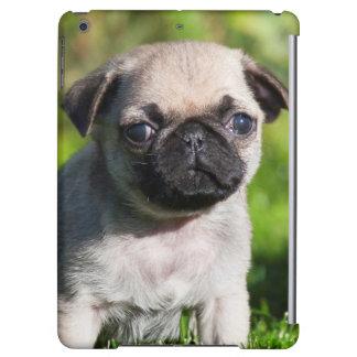USA, California. Pug Puppy Looking At You