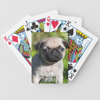 USA, California. Pug Puppy Looking At You Bicycle Playing Cards