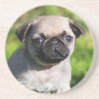 USA, California. Pug Puppy Looking At You Coaster