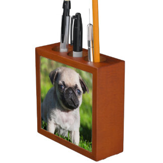 USA, California. Pug Puppy Looking At You Desk Organiser