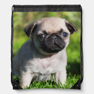 USA, California. Pug Puppy Looking At You Drawstring Bag