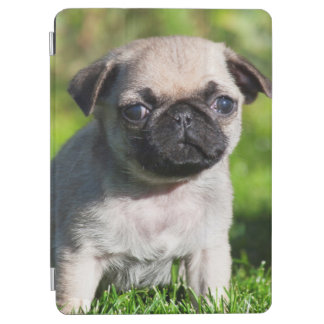 USA, California. Pug Puppy Looking At You iPad Air Cover