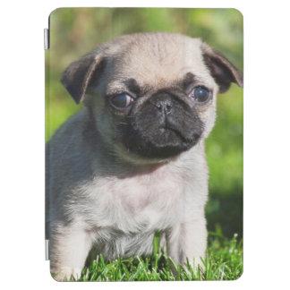 USA, California. Pug Puppy Looking At You iPad Air Cover