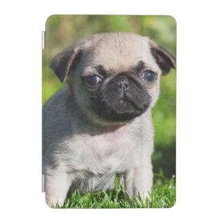 USA, California. Pug Puppy Looking At You iPad Mini Cover
