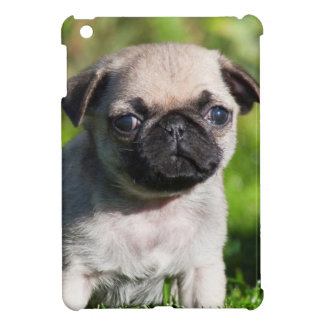 USA, California. Pug Puppy Looking At You iPad Mini Covers