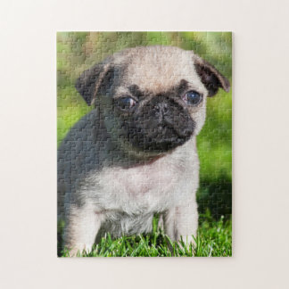 USA, California. Pug Puppy Looking At You Jigsaw Puzzle