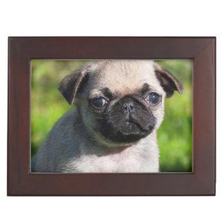 USA, California. Pug Puppy Looking At You Keepsake Box