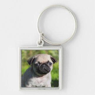 USA, California. Pug Puppy Looking At You Key Ring